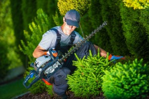 Landscaper Insurance Essentials For A Solid Business Plan