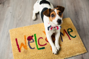 How Pets Can Affect Your Homeowner's Insurance Rates
