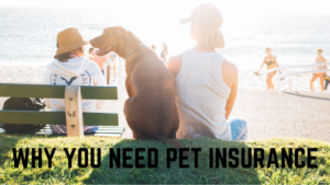 why you need pet insurance